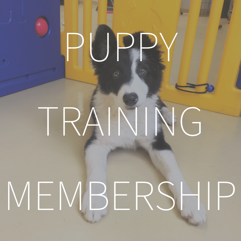 Online Puppy Training Membership