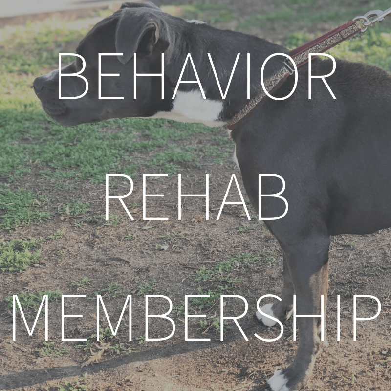 Behavior Rehab Membership