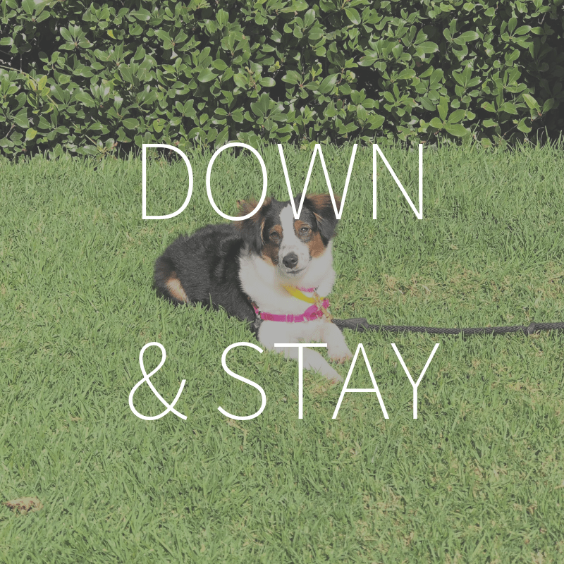 Down & Stay