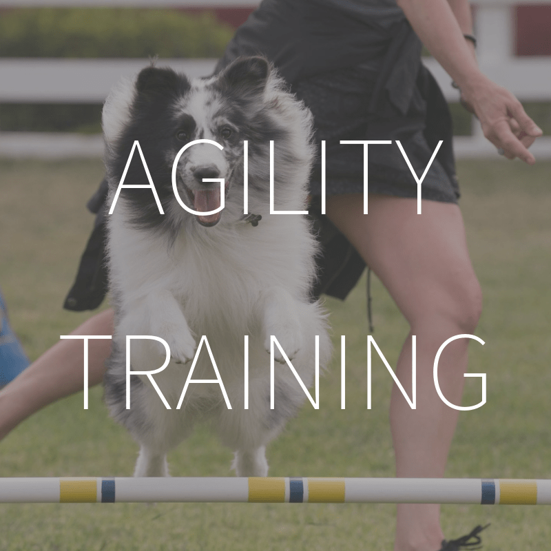 Agility Training – Coming Spring 2019