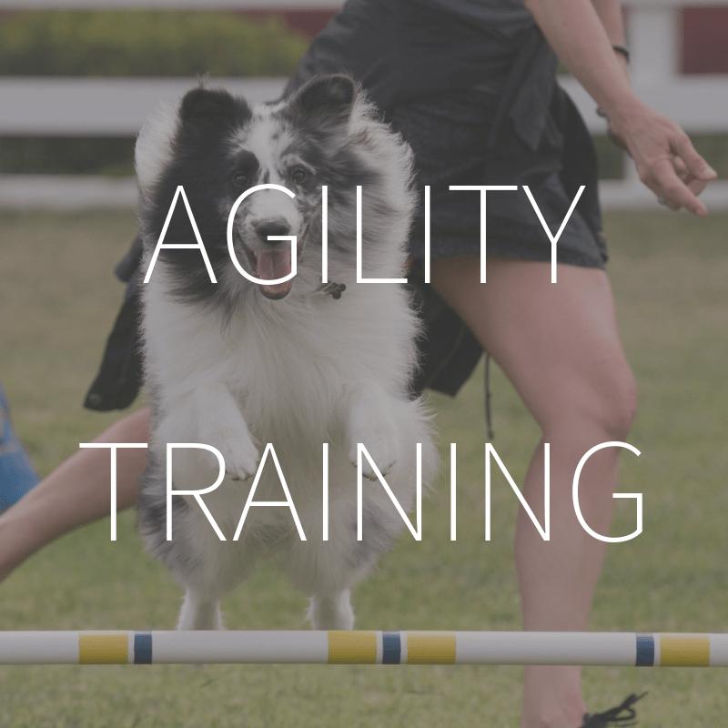 Agility Training – Coming February 2019