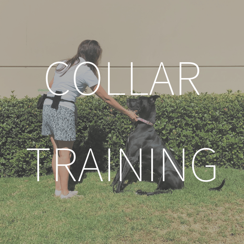 Collar Training