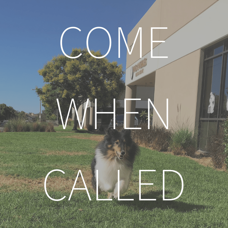 Come When Called