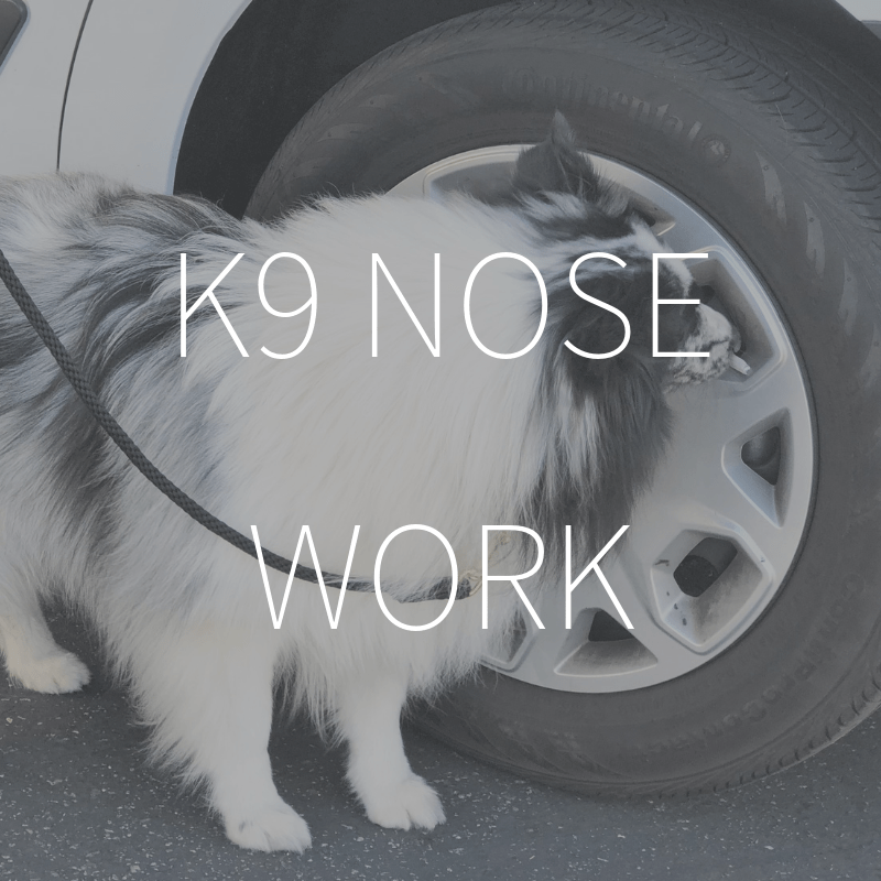 Nose Work – Intro To Searching