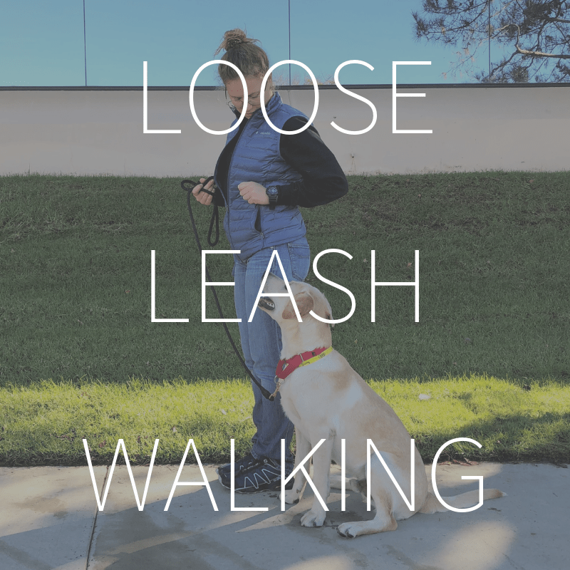 Loose Leash Walking