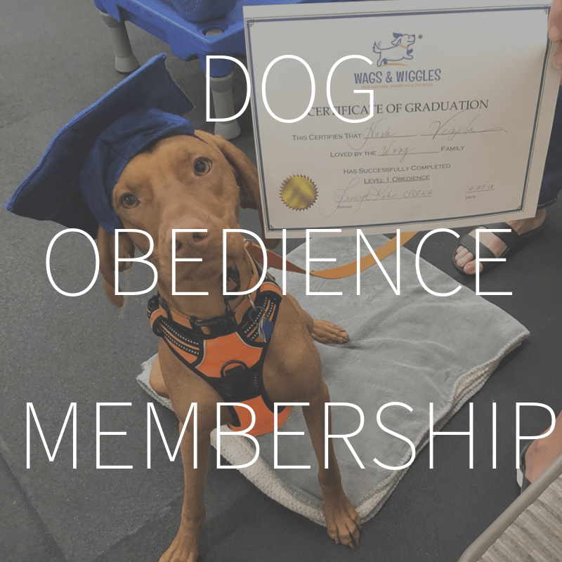 Dog Obedience Membership