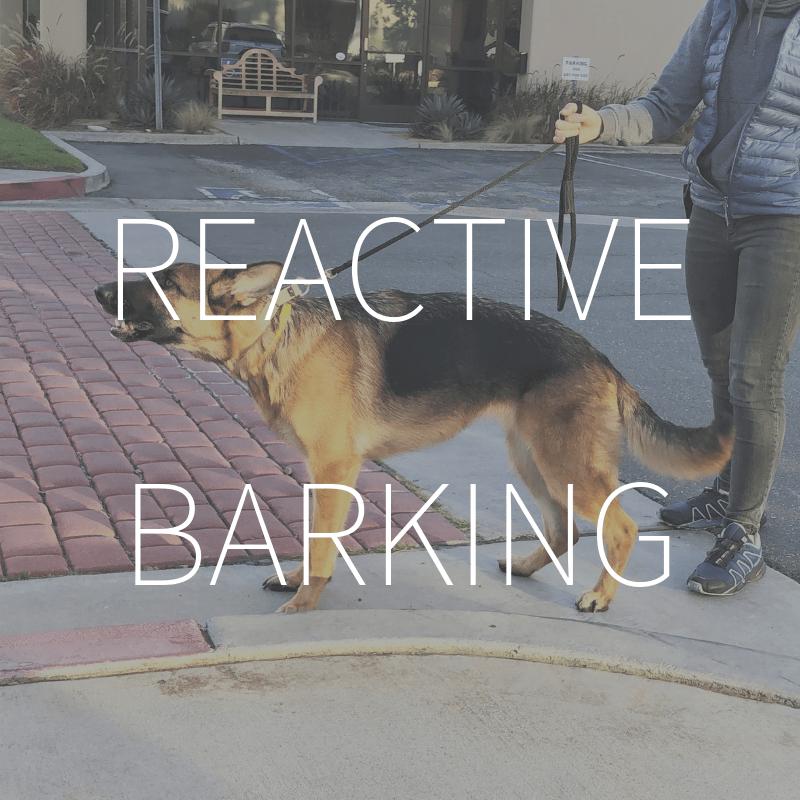 Reactive Barking – Coming Summer 2019