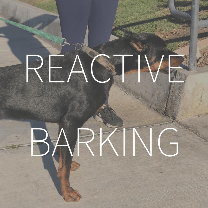 Reactive Barking – Coming February 2019