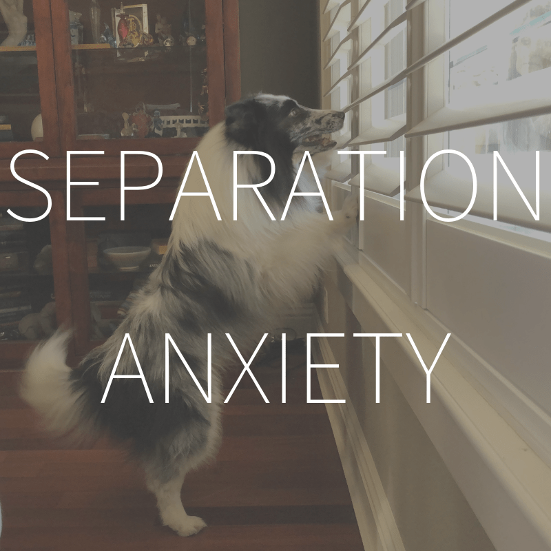 Separation Anxiety – Coming Spring 2019