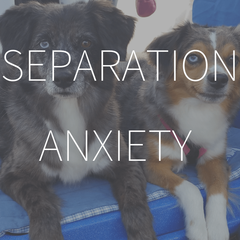 Separation Anxiety – Coming February 2019