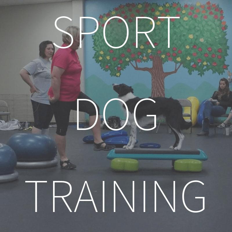 Sport Dog Body Awareness Training – Coming February 2019