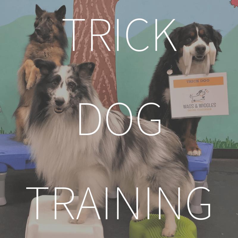 Trick Dog Training
