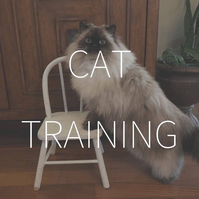 Cat Training – Coming February 2019