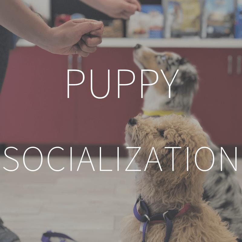 Puppy Socialization