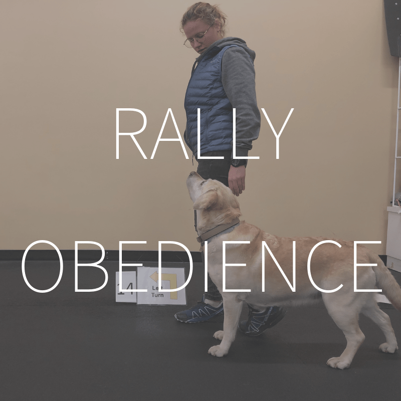 Rally Obedience – Coming Spring 2019