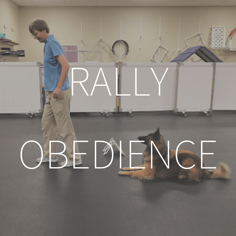 Rally Obedience – Coming February 2019
