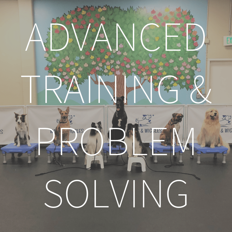 Advanced Training & Problem Solving