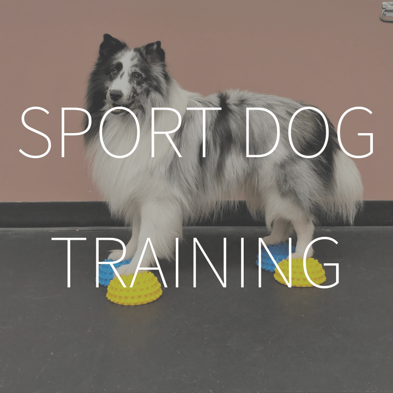 Sport Dog Body Awareness Training Level 2